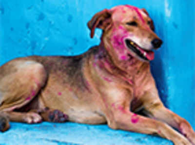 Pet Puja: Holi with your dog