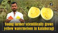 Young farmer scientifically grows yellow watermelons in Kalaburagi