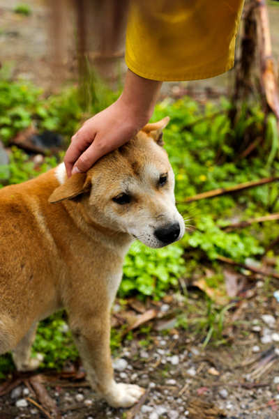 Pet Puja: Let's maintain a good relationship with the city's dogs