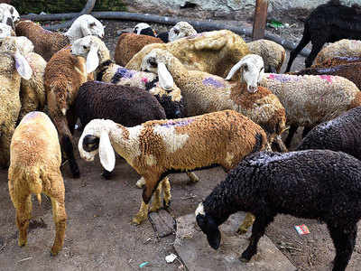 Mutton prices surge by 40% in the past month
