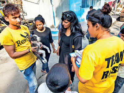 PUNE GETS FIRST SCIENTIFIC CENSUS FOR STRAY DOGS