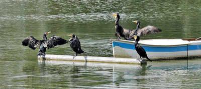 Pedal away on Yediyur lake