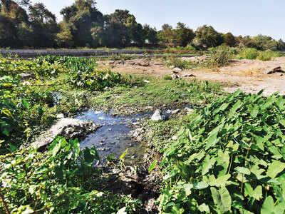 Mutha stream purified via natural vegetation
