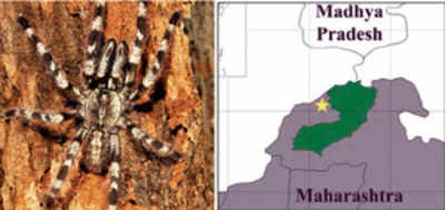 New spider named after city naturalist