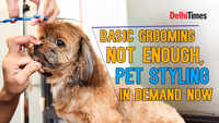 Basic grooming not enough, pet styling in demand now