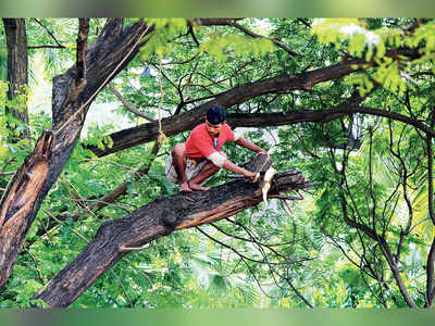BMC's plan to trim trees hit by lack of experts