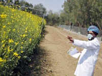 Govt will not take final call on GM mustard without due process: Prakash Javadekar