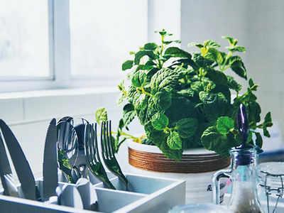 PLAN AHEAD: Grow herbs