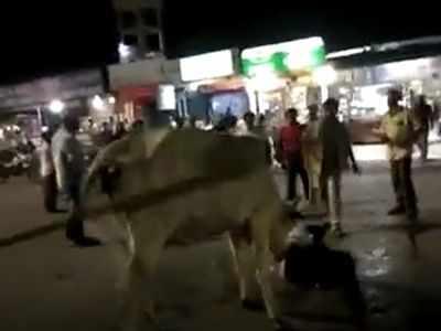 Cow attacks rickshaw puller in revenge for taking her calf's carcass
