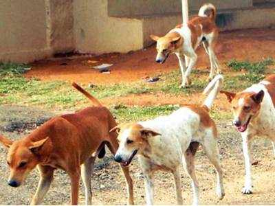 Vasai civic body fined `10k for dog attack on 5-yr-old