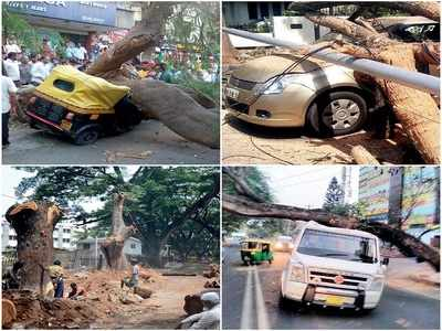 Rain of terror: BBMP hasn't paid tree cutting contractors for 2 years; diseased, dying trees pose a threat to Bengalureans