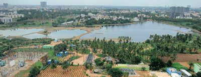 Sadaramangala lake finds itself
