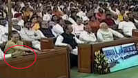 Rahul Gandhi insults forces during President's address?