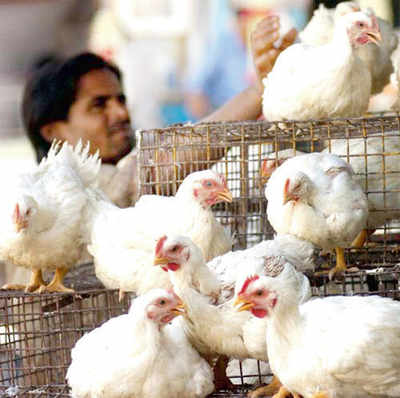 A month that can bring down chicken prices
