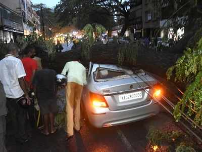45 trees uprooted due to heavy rain in Bengaluru