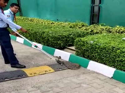 Snakes in home, office mishandled