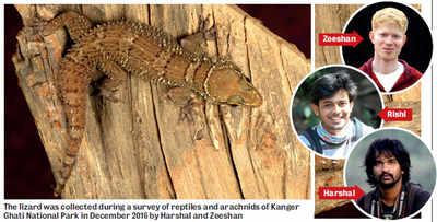 Mangaluru: New species of gecko found in Eastern ghats