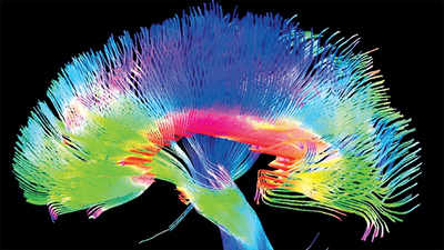 The new cartographers of the brain