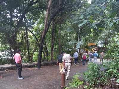 BJP legislator revives plan to widen Siri Road; Malabar Hill residents to protest to save trees