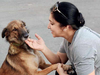 NGO runs census for stray dogs in the city