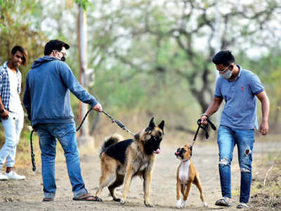 No more walking dogs on the tekdi