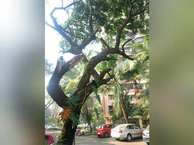 HC raps BMC for dearth of green experts in tree authority