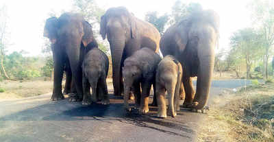 Youth crushed to death by elephants while clicking selfie