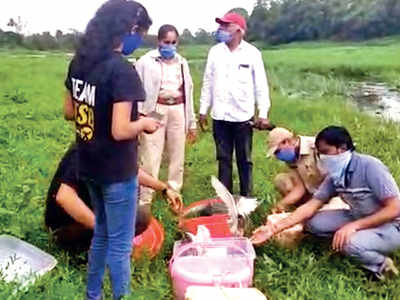 Birds maimed at tehsildar's office released into wild