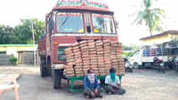 200 kg cannabis seized in AP's Krishna district, 2 arrested