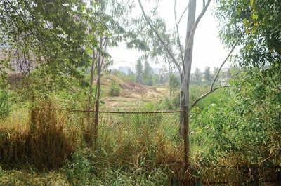 Debris choking artery of Kasavanahalli Lake