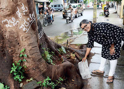 Thanks to 67-yr-old, this tree is home to a garden