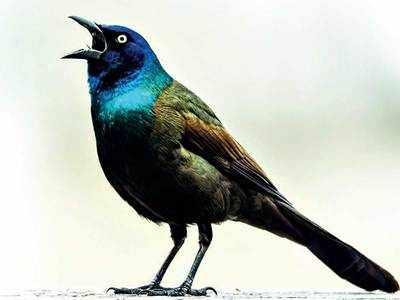 PLAN AHEAD: Birding by Ear 101