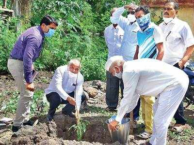 Despite pandemic obstacle,  Ranmala village in Pune plants 600 trees via unique drive