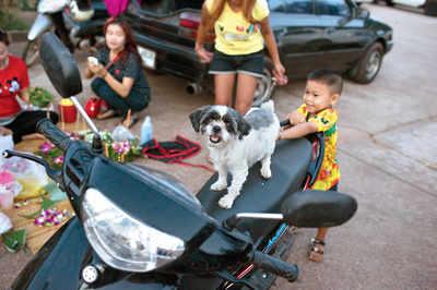 Pet Puja: Pet-friendly establishments