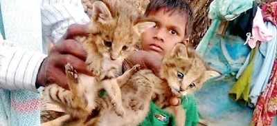The cats he was playing with were leopard cubs