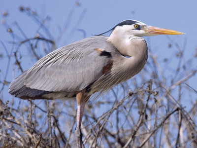 Amid bird flu scare, two herons found dead in Kalyan