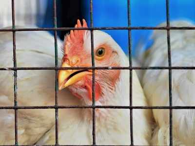 Bird Flu: Maharashtra government on alert to deal with any situation, says Animal Husbandry Minister
