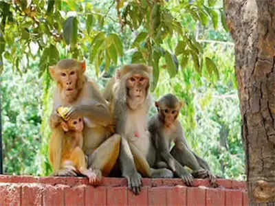 Kyasanur Forest Disease circular issued, vaccination planned