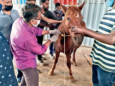 Ex-armyman saves injured horse