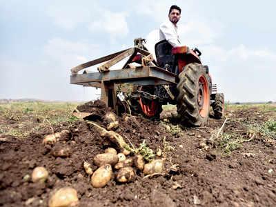 Hot potatoes of Talegaon