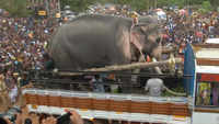 Kerala's 'most-loved' elephant participates in Thrissur Pooram festival