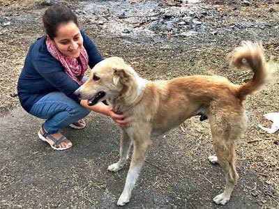 Aundh cantonment woman harassed for feeding strays