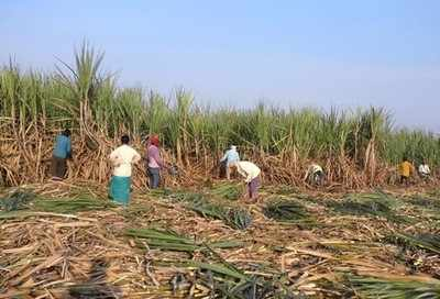 Glut in sugar industry: State proposes to use 25% sugarcane to produce ethanol
