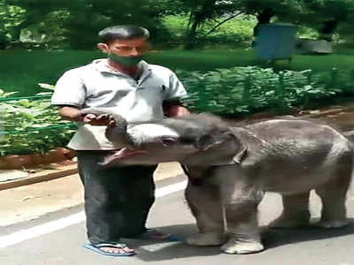 Messiah for Mysuru zoo's abandoned baby animals