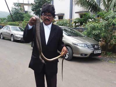 Rat snake bites Panvel judge in court chamber