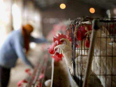 Bird Flu: Thane officials asked to pay special attention to bird migration in district