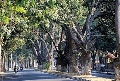 13,210 emails for saving Jayamahal trees