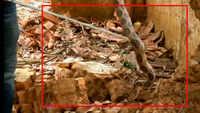Russell's viper rescued in Karnataka's Shivamogga