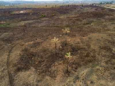 Deforestation of Amazon increased by 222% in August