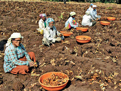 Do you think the Budget provision of Rs 6,000 per year will benefit farmers?